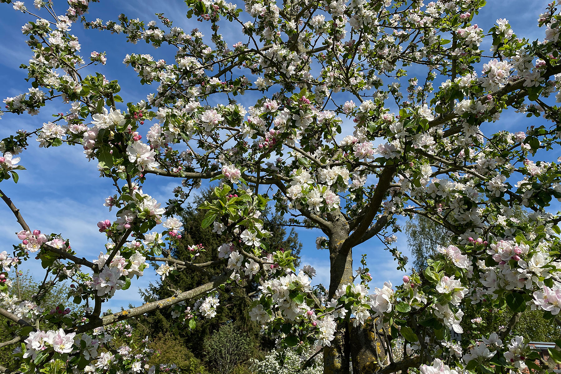 Humbert Mutterboden im Obstgarten
