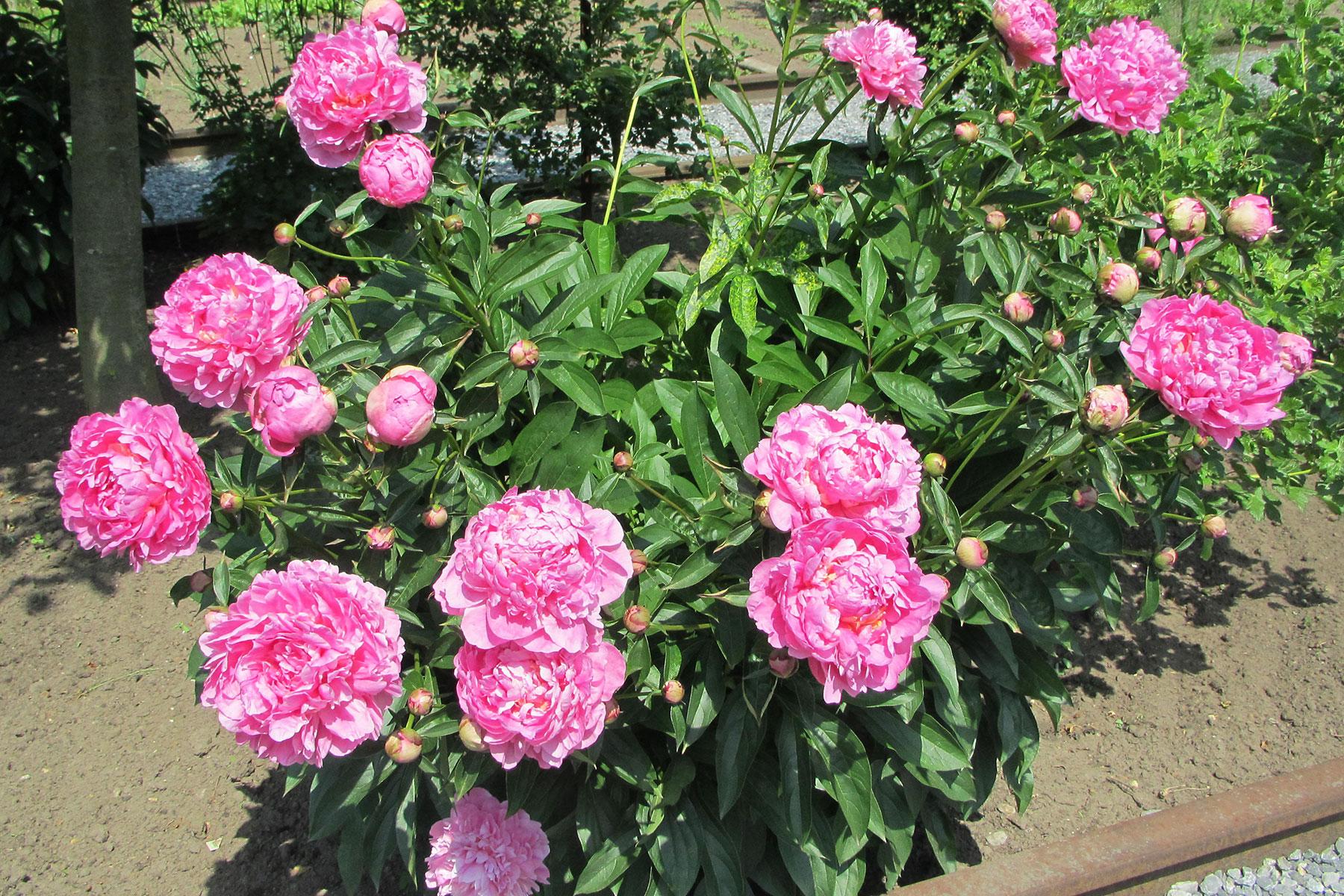 Humbert Mutterboden für Zierpflanzen